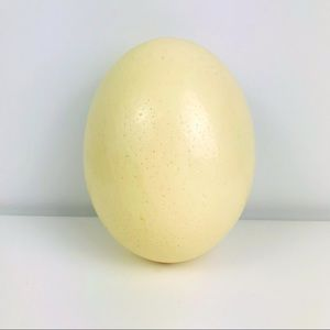 Genuine Ostrich Large Egg